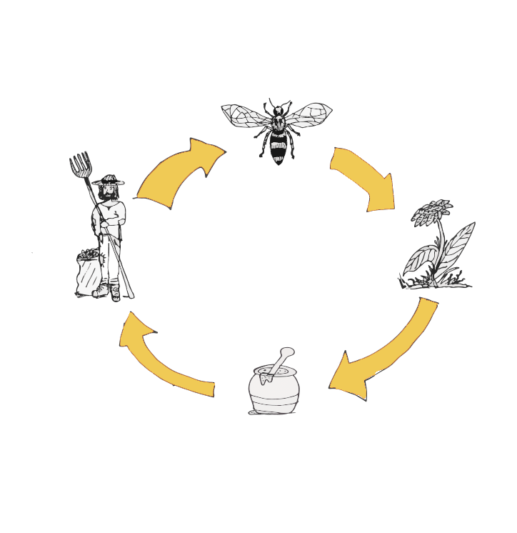 Simple sheme to show the relation between bees and the bee keeper.