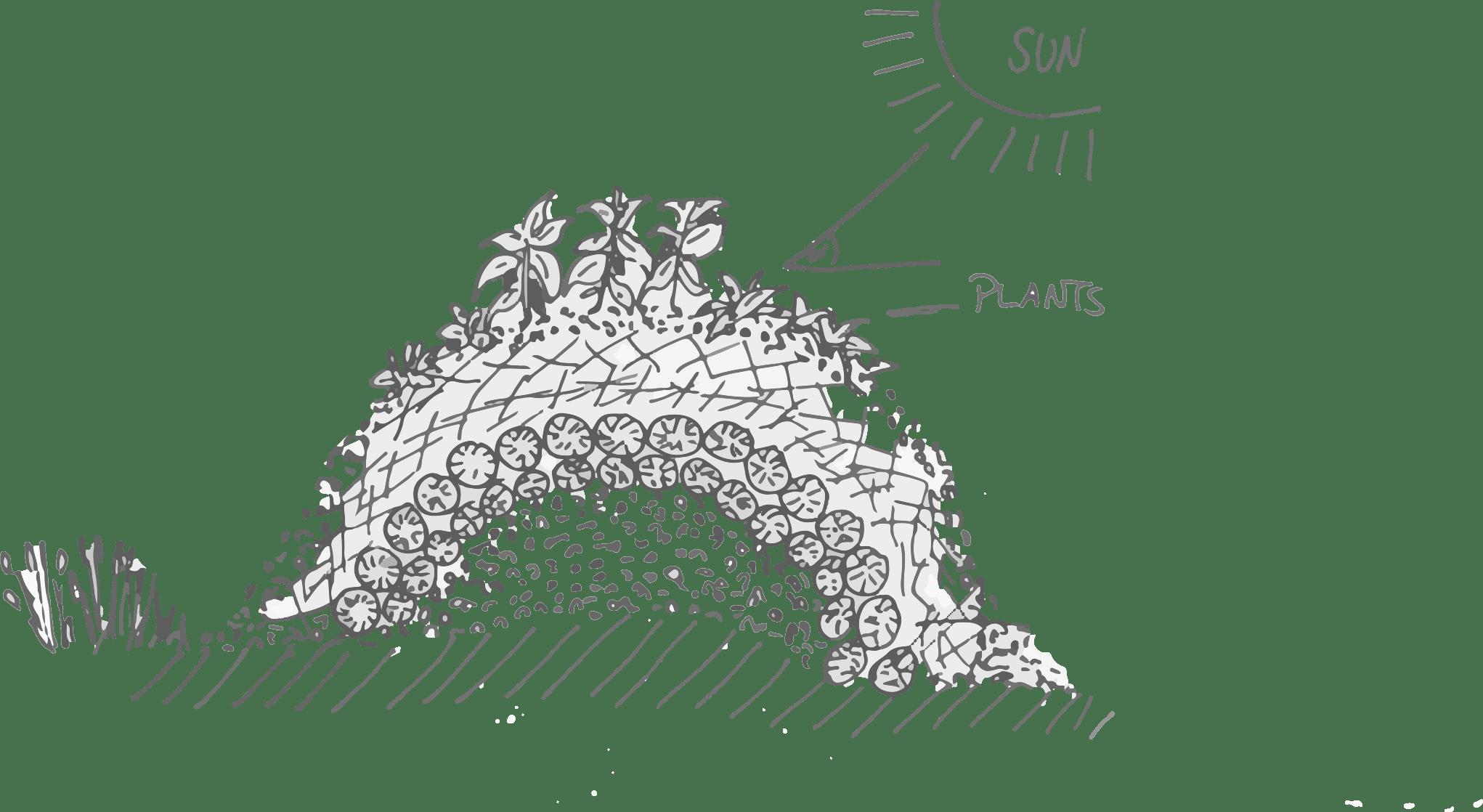 hügelbeet_plants
